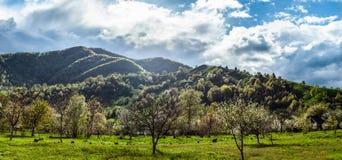 在风景的全景与绿草、小山和树,晴朗的天气,多云天空 库存图片