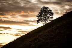 在风景的单独树 免版税库存图片