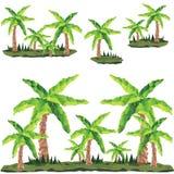 在风景的多角形棕榈 艺术开花夹子例证结构树 图库摄影