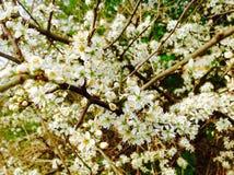 在风景的小白花 免版税库存照片