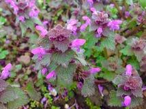在风景的小紫色花 免版税库存图片