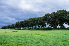 在风景的树 免版税库存图片