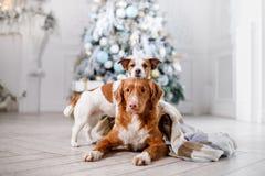 在风景的狗、假日和新年、圣诞节,假日和愉快 库存照片