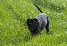在风景的狗 免版税库存照片