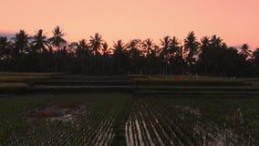 在风景的空中录影与在日出或日落的米大阳台在巴厘岛 股票录像