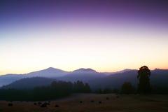 在风景的美丽如画的有薄雾和冷的日出 第一树冰在有雾的早晨草甸 库存图片