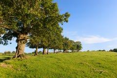 在风景的行树 库存图片