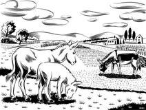 在风景的驴子 免版税图库摄影