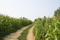 在风景麦地的土路 库存图片