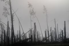 在风暴大风期间的残破的树 早晨薄雾薄雾在增殖比的 免版税库存图片