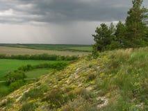 在风暴森林小山花前的自然 免版税库存图片