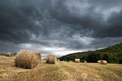 在风暴的谷物领域 免版税库存图片