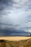 在风暴麦子的云彩领域 库存图片