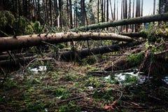 在风灾难以后的森林 免版税库存图片