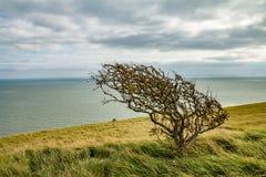在风的一棵孤立树 免版税库存照片