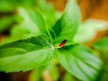 在风的一颗小蒲公英种子 免版税图库摄影