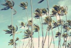 在风的减速火箭的葡萄酒夏威夷棕榈Trrees 图库摄影