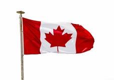 在风的加拿大旗子在白色背景 免版税图库摄影