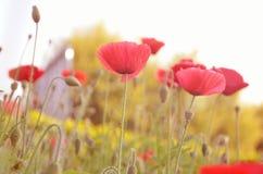 在风的向日葵 免版税库存图片