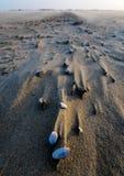 在风的壳在海滩附近的Camargue 免版税库存照片
