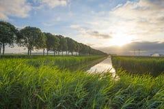 在风的挥动的芦苇沿一条运河的岸在日出的 免版税库存图片