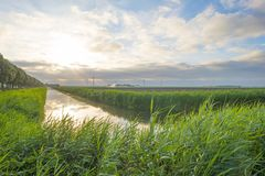 在风的挥动的芦苇沿一条运河的岸在日出的 库存照片