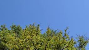 在风的树梢在热带雨林 股票视频