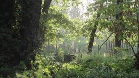 在风的树,背后照明下午 股票视频