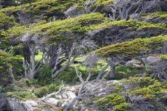 在风的树 图库摄影
