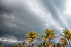 在风的棕榈反对风雨如磐的天空 免版税库存图片