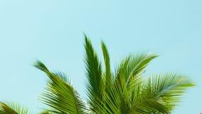 在风的棕榈树颤抖冠反对天空 免版税库存图片
