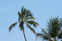 在风的棕榈树 免版税库存照片