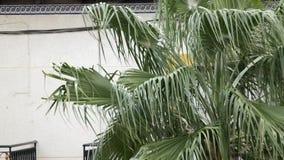 在风的棕榈 影视素材