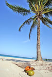 在风的棕榈 免版税库存图片