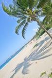 在风的棕榈 免版税库存照片