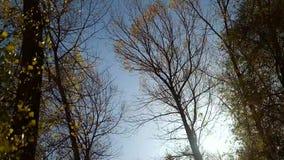 在风的秋天树 股票录像