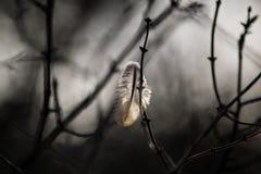 在风的羽毛 库存照片