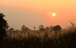 在风的芦苇与日落天空 免版税库存图片