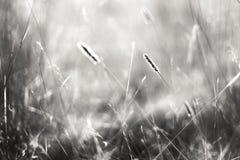 在风的麦子 免版税库存图片