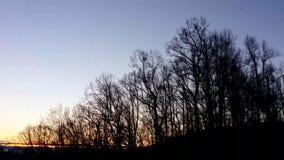 在风的结构树 影视素材