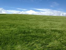 在风的绿色领域 免版税库存照片