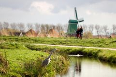 在风车风景的灰色苍鹭 免版税图库摄影