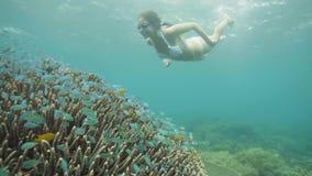 在风镜的少女游泳的水中和观看的鱼和珊瑚礁在海 潜航在海洋和看的妇女 股票视频