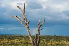 在风雨如磐的天空的微弱的彩虹 库存照片