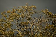 在风雨如磐的天空的背景的叶茂盛分支 免版税库存图片