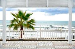 在风雨如磐的波浪海滩的棕榈树 库存图片