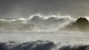 在风雨如磐的海的海鸥舞蹈 图库摄影