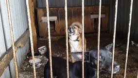 在风雨棚的流浪狗在乌克兰 影视素材