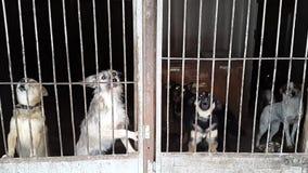 在风雨棚的流浪狗在乌克兰 股票录像
