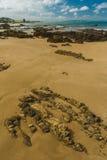 在风,新西兰的海岸线 免版税库存照片
